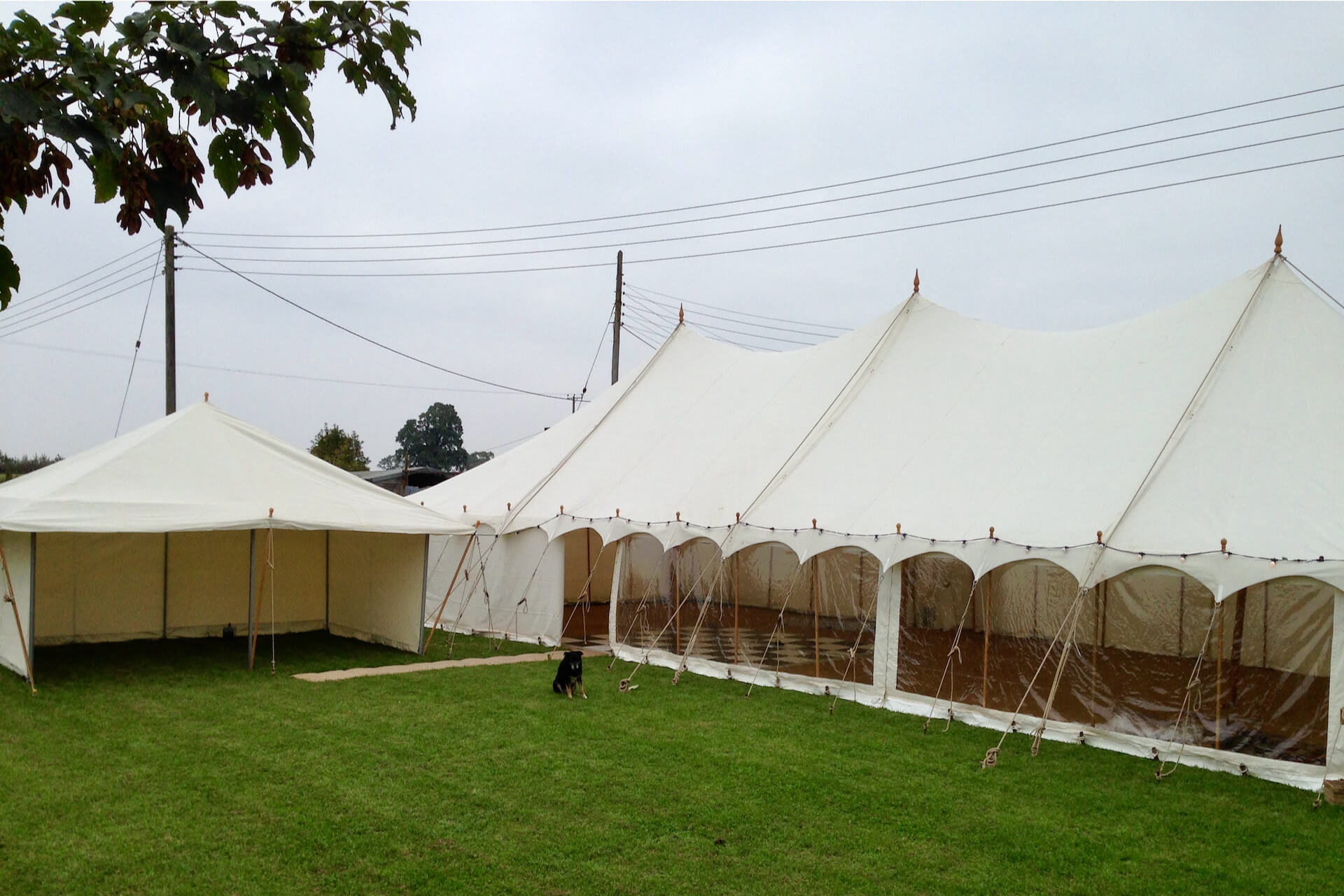 Tea Rose marquee and Petal marquee