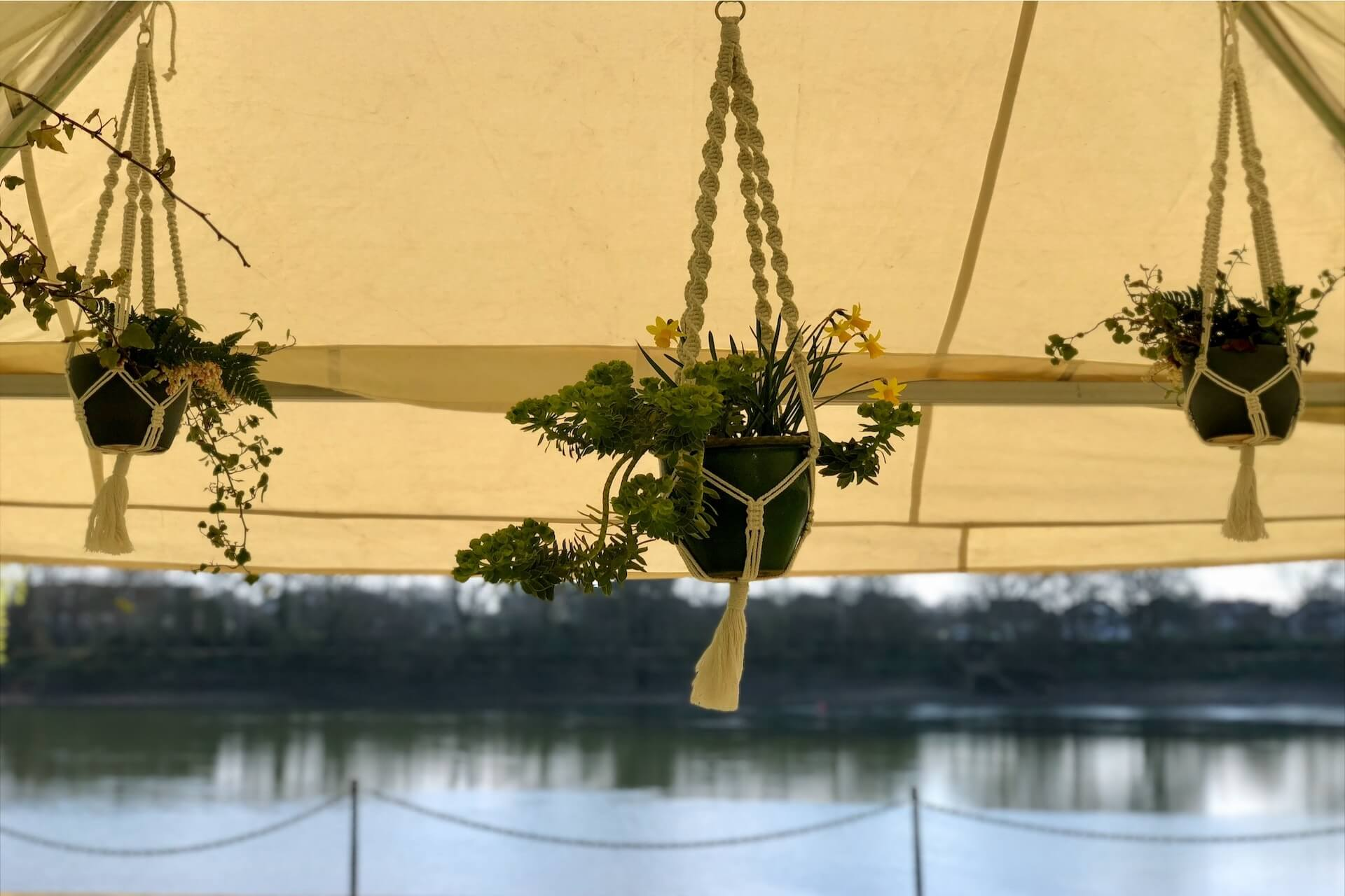 plants hung in macrame hangers inside a marquee