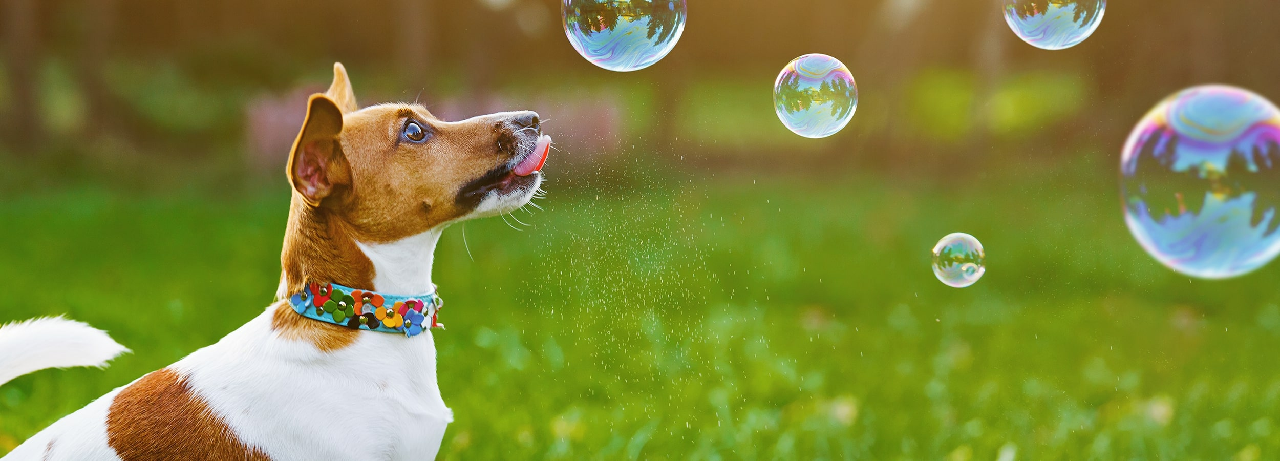 A dog chasing bubbles