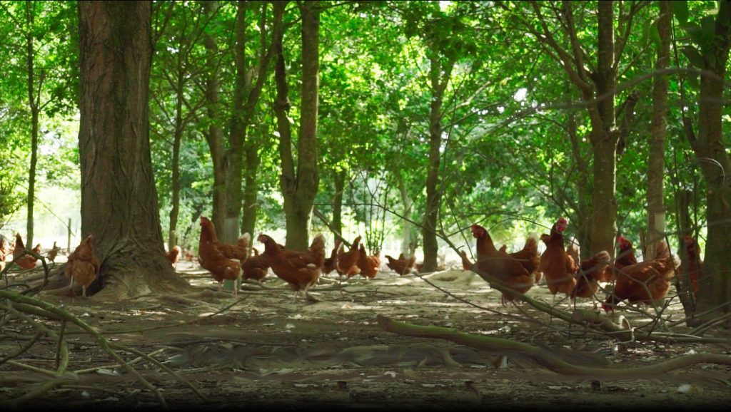 Wealdon Woods Free Range Egg Farm