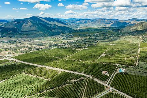 An image of an avocado ranch in Pauma Valley, California.