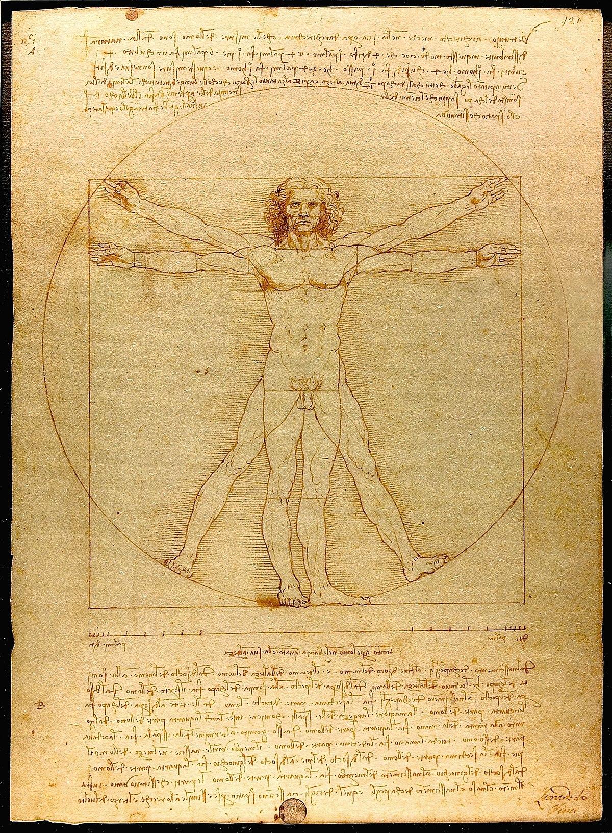 Vitruvian Man - Wikipedia