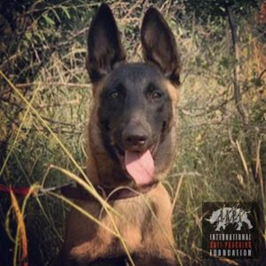 Katana our K9 Patrol Dog