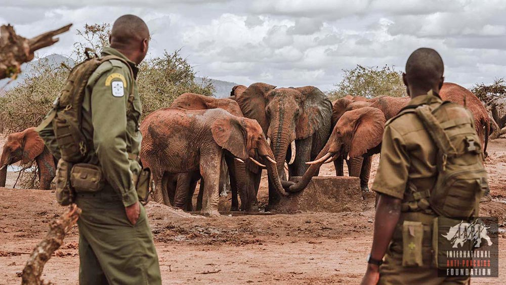 LEADRangers protecting elephants