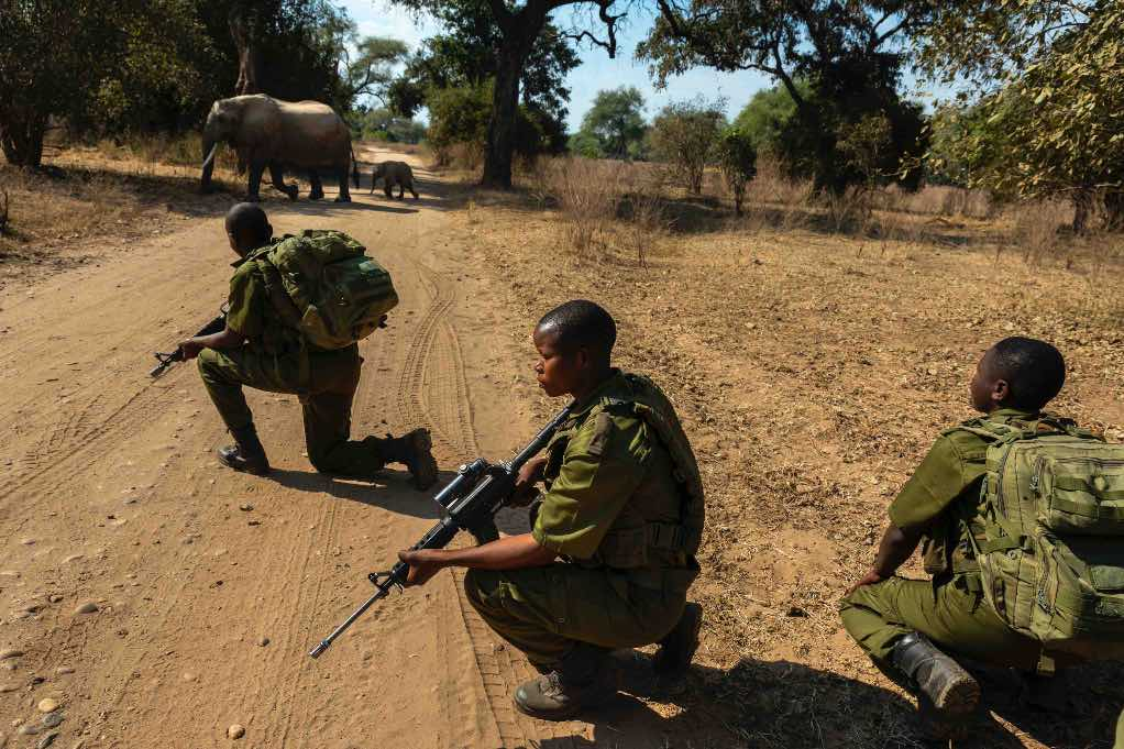 Rangers protecting elephants