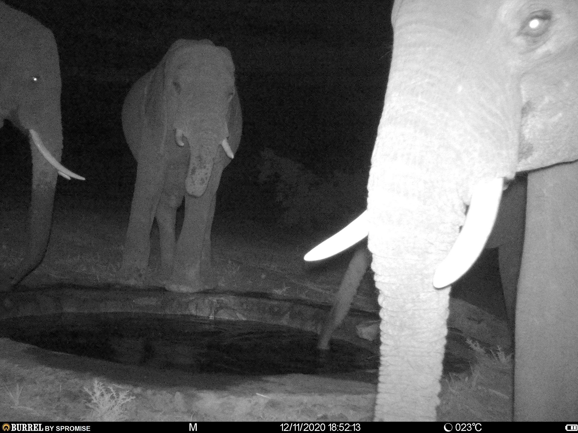 Elephants enjoying a night time drink