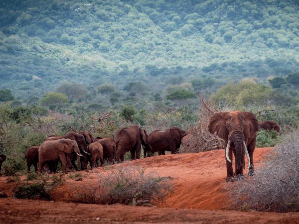 African Habitat Conservation Fund