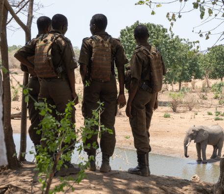 rangers-and-elephant