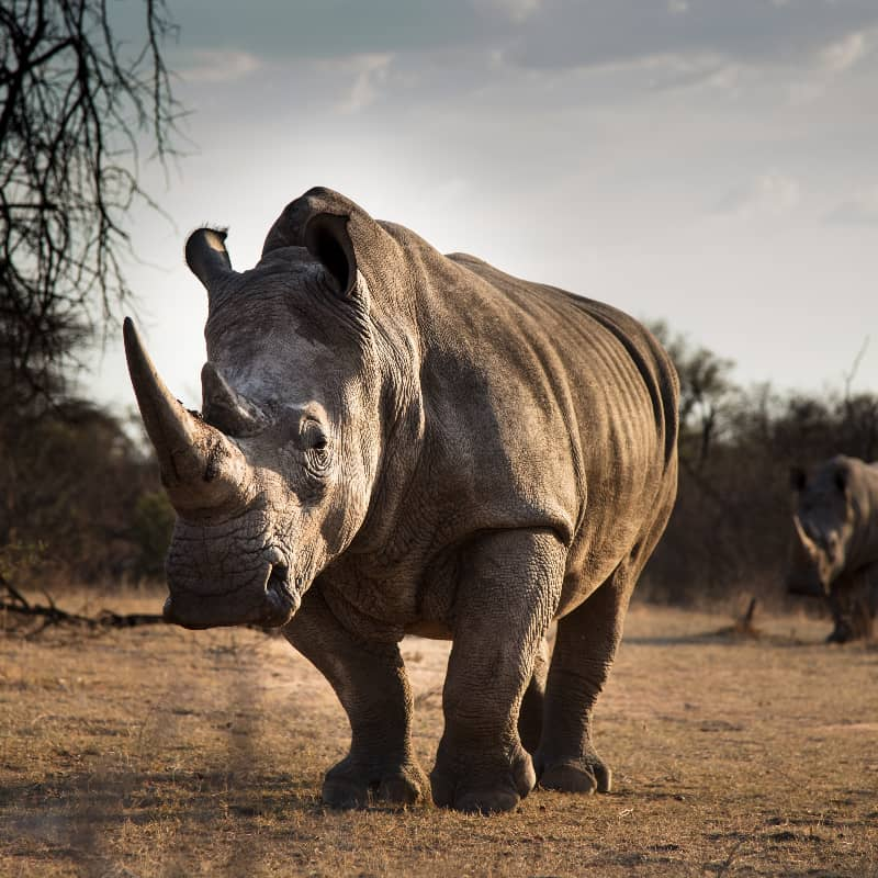 You can protect this Rhino by donating to our cause