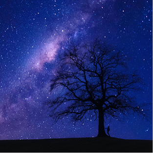 A silhouette of a bare tree stands against a purple blue sky filled with stars.