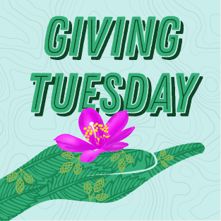 Giving Tuesday text along with a green, illustrated hand cupping a Menges flameflower
