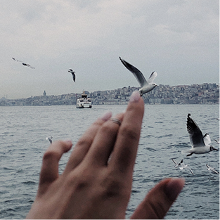 Close-up of someone's hand against a backdrop showing a body of water and birds