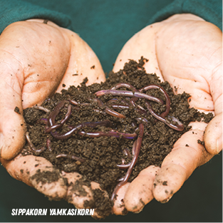 Cupped hands hold a pile of soil filled with earthworms.