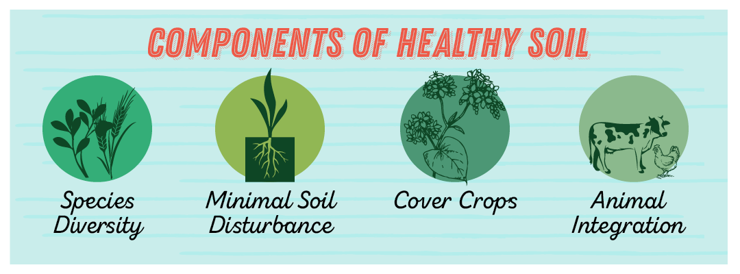 Components of Healthy Soil: species diversity, minimal soil disturbance, cover crops, and animal integration.