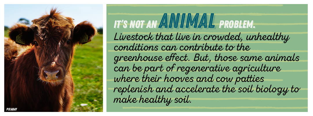 it's not an animal problem.  Livestock that live in crowded, unhealthy conditions can contribute to the greenhouse effect. But, those same animals can be part of regenerative agriculture where their hooves and cow patties replenish and accelerate the soil biology to make healthy soil.
