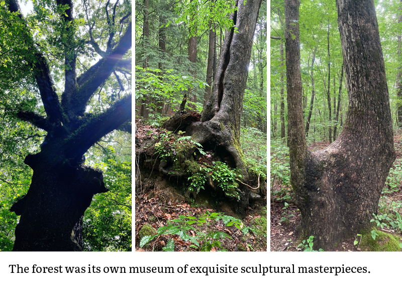 The forest was its own museum of exquisite sculptural masterpieces.