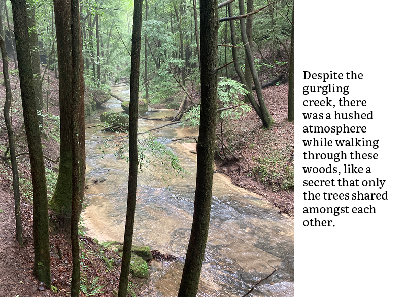 Despite the gurgling creek, there was a hushed atmosphere while walking through these woods, like a secret that only the trees shared amongst each other.