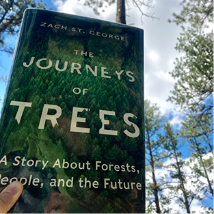 A copy of The Journeys of Trees book is held up against the sky and a couple of trees.