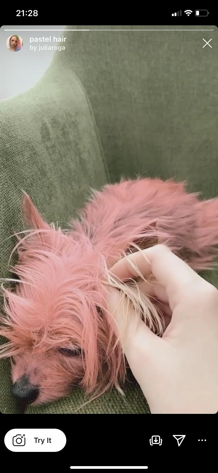 pastel hair by @juliaroga Instagram filter
