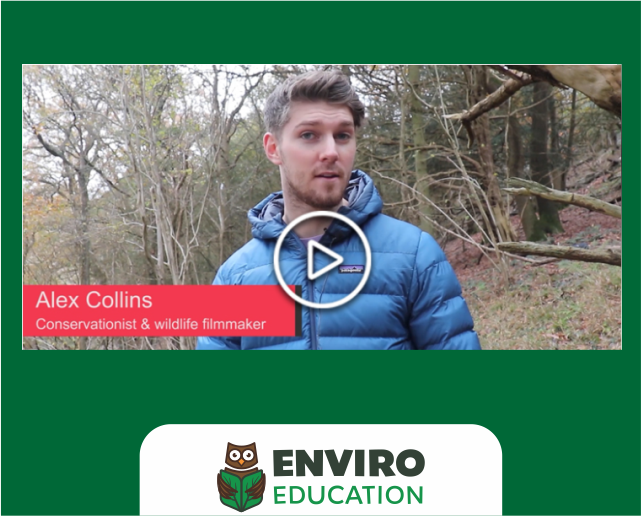 @AlexCollinsWaC produces badger baiting video