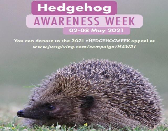 Hedgehog awareness week starts 2nd May
