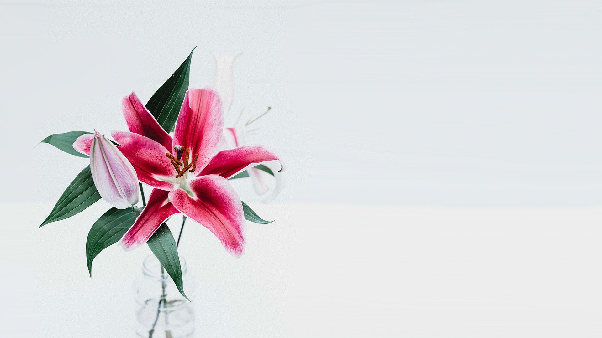 Kontakt - Davidovac Flower Studio