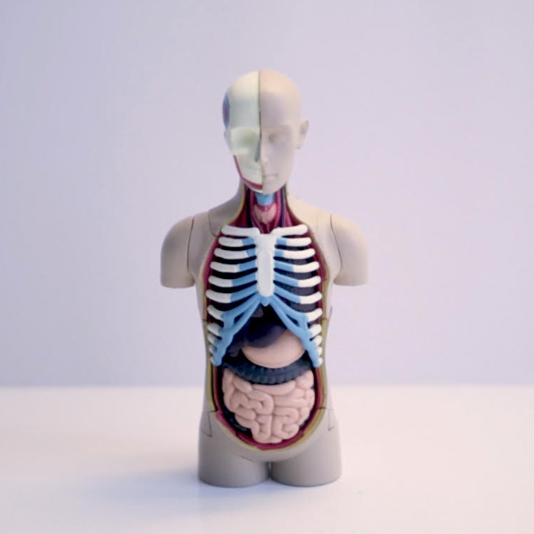 Anthroplogy of Dead Body