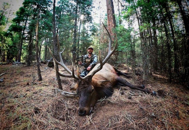 Arizona Elk Hunt 2020 - 8 Years in the Making