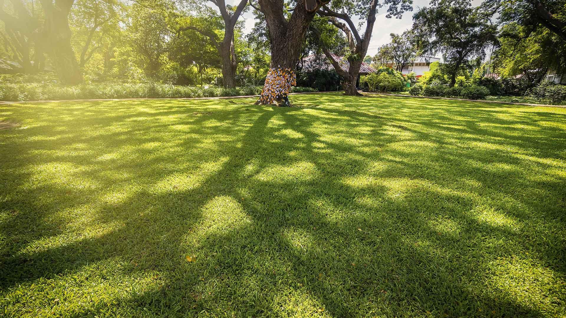 Schattiger Garten Rasen