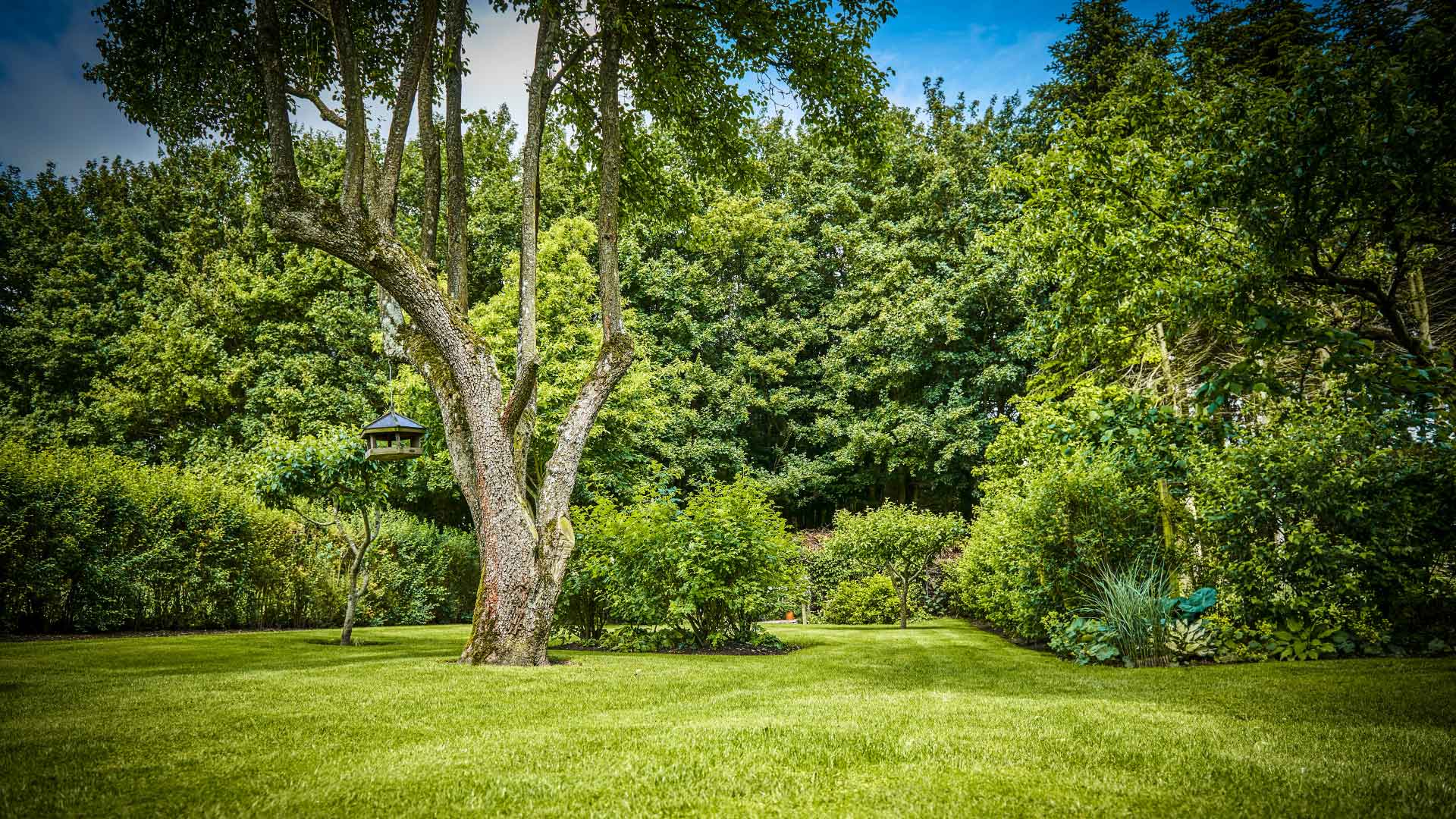 Garten mit Rollrasen und Bäumen