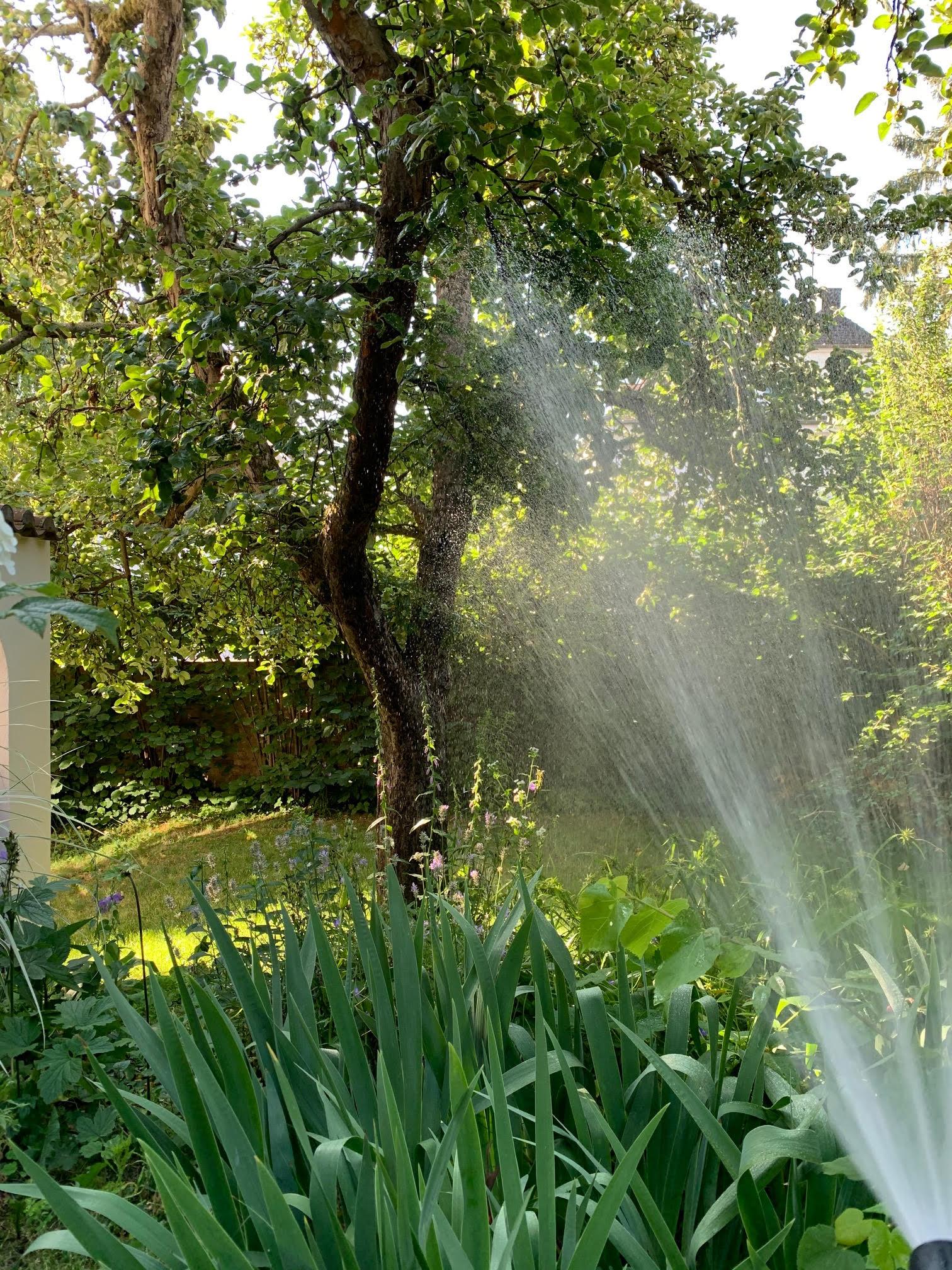 grünen Garten gießen