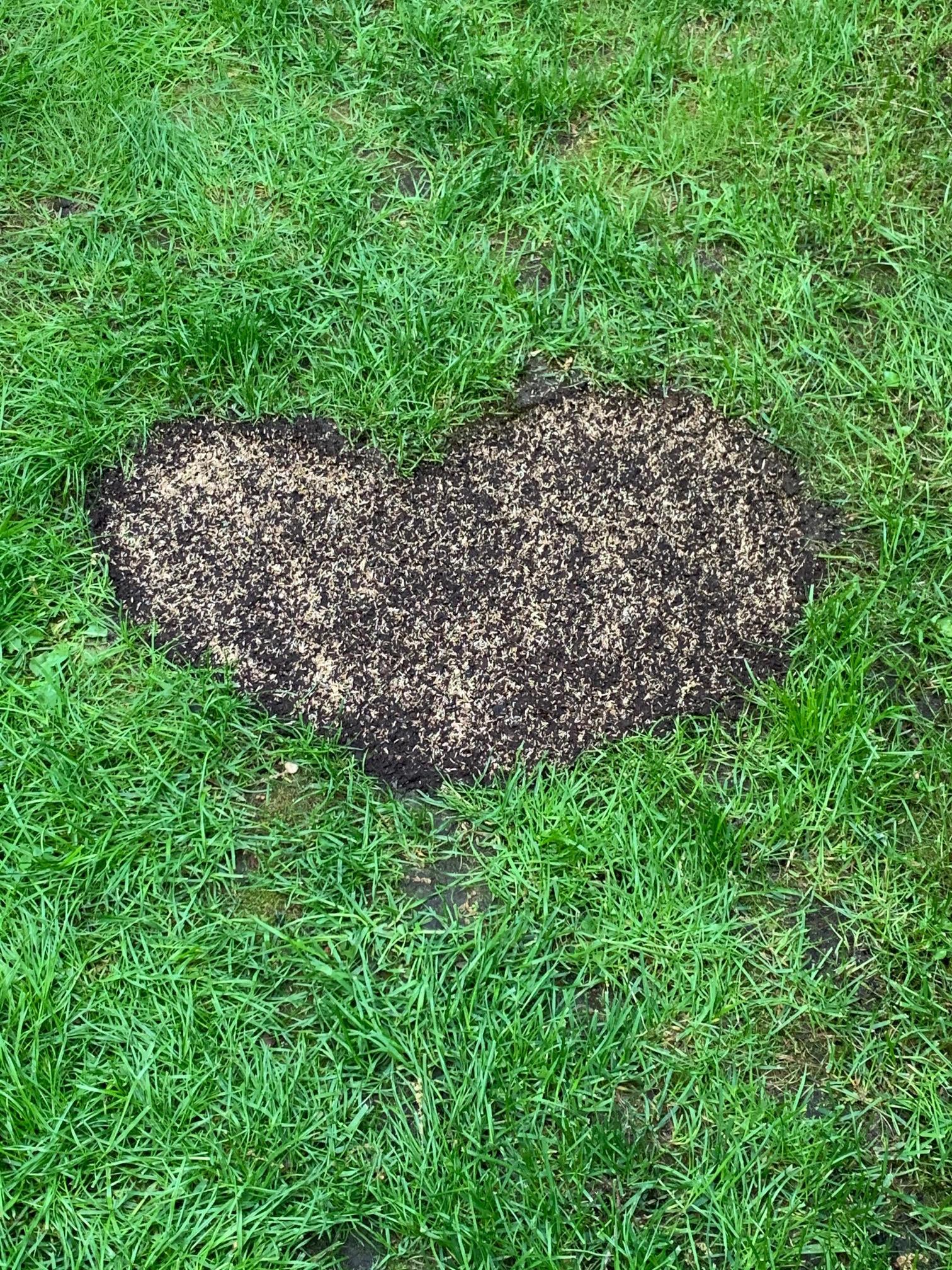 Rasen mit Herz