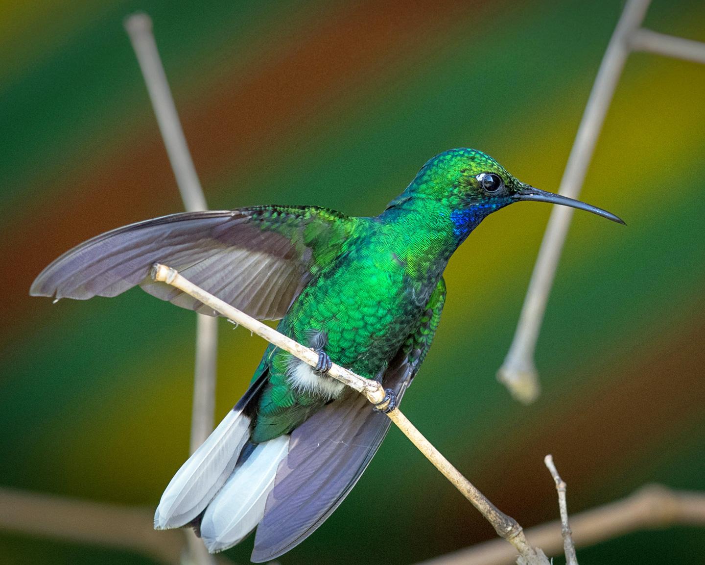 Birding Destination