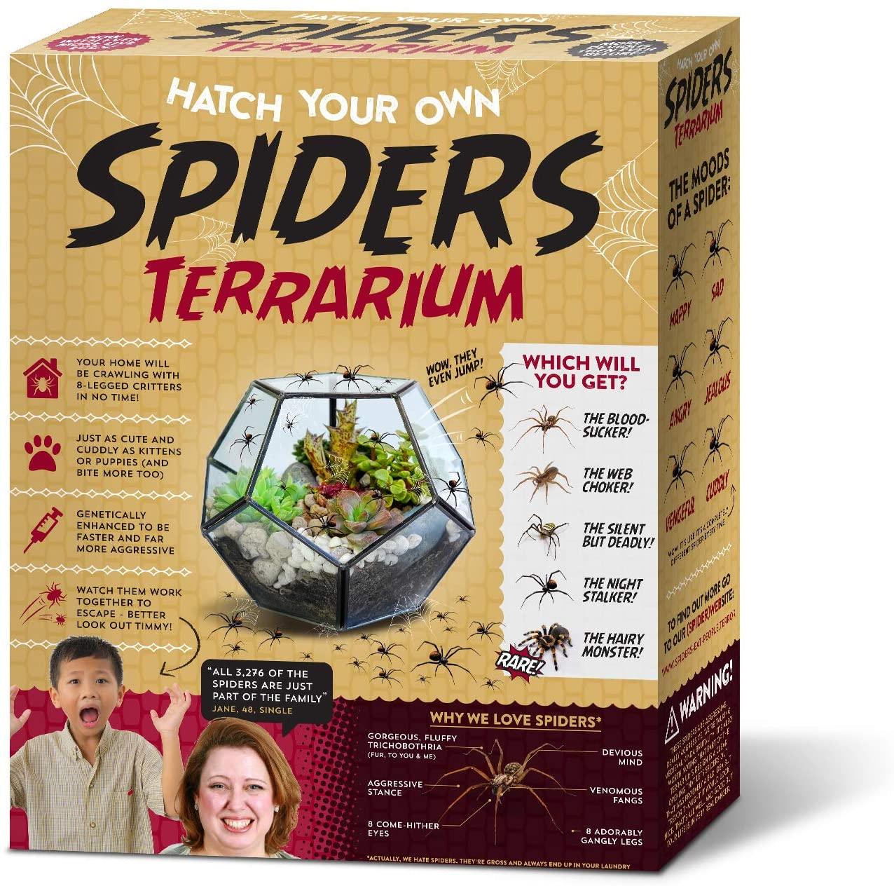 Hatch Your Own Spiders Terrarium