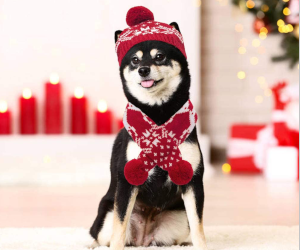 Pets Christmas Hat & Scarf