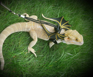 Lizard Leash and Wing Set