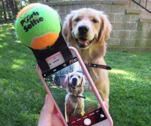 Pet Selfie Tool