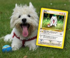 Custom Pet Pokemon Cards
