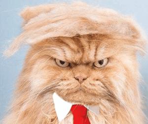 Trump Pet Costume