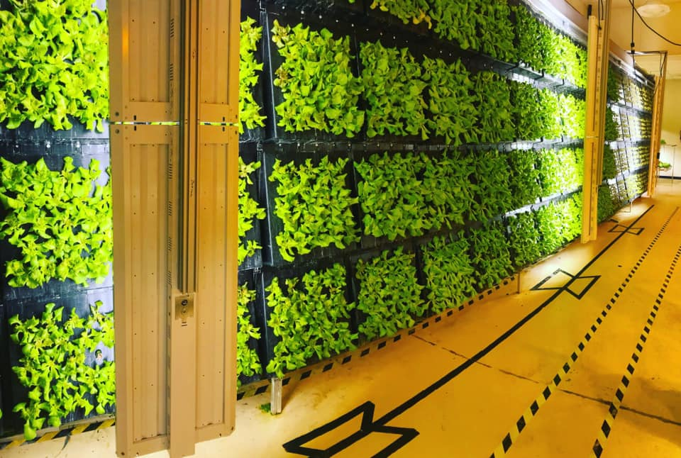 a picture of our vertical plant wall