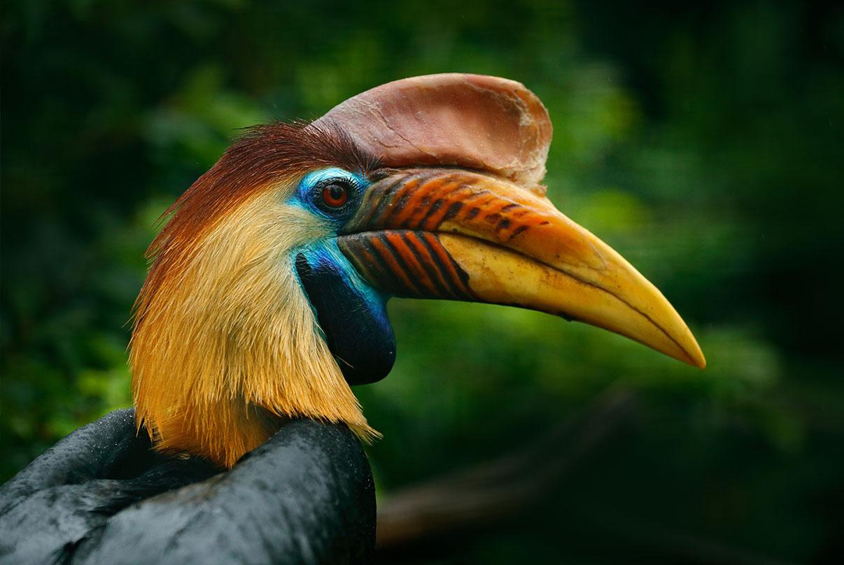 Wild Tour Through the Jungles of Borneo