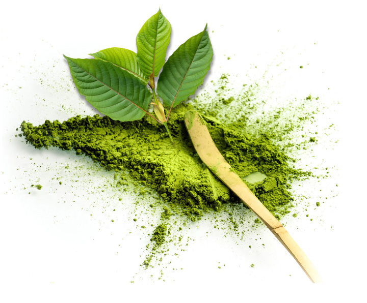 World's Freshest Kratom from Kratom.com. Freshness starts from the seed on through the entire growing and processing efforts. You'll tased the difference in Fresh Kratom.