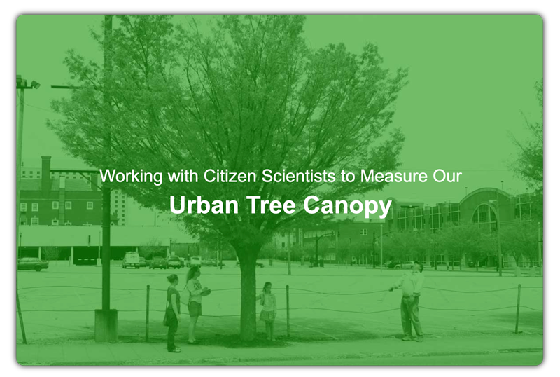 2013 Downtown Tree Survey Link
