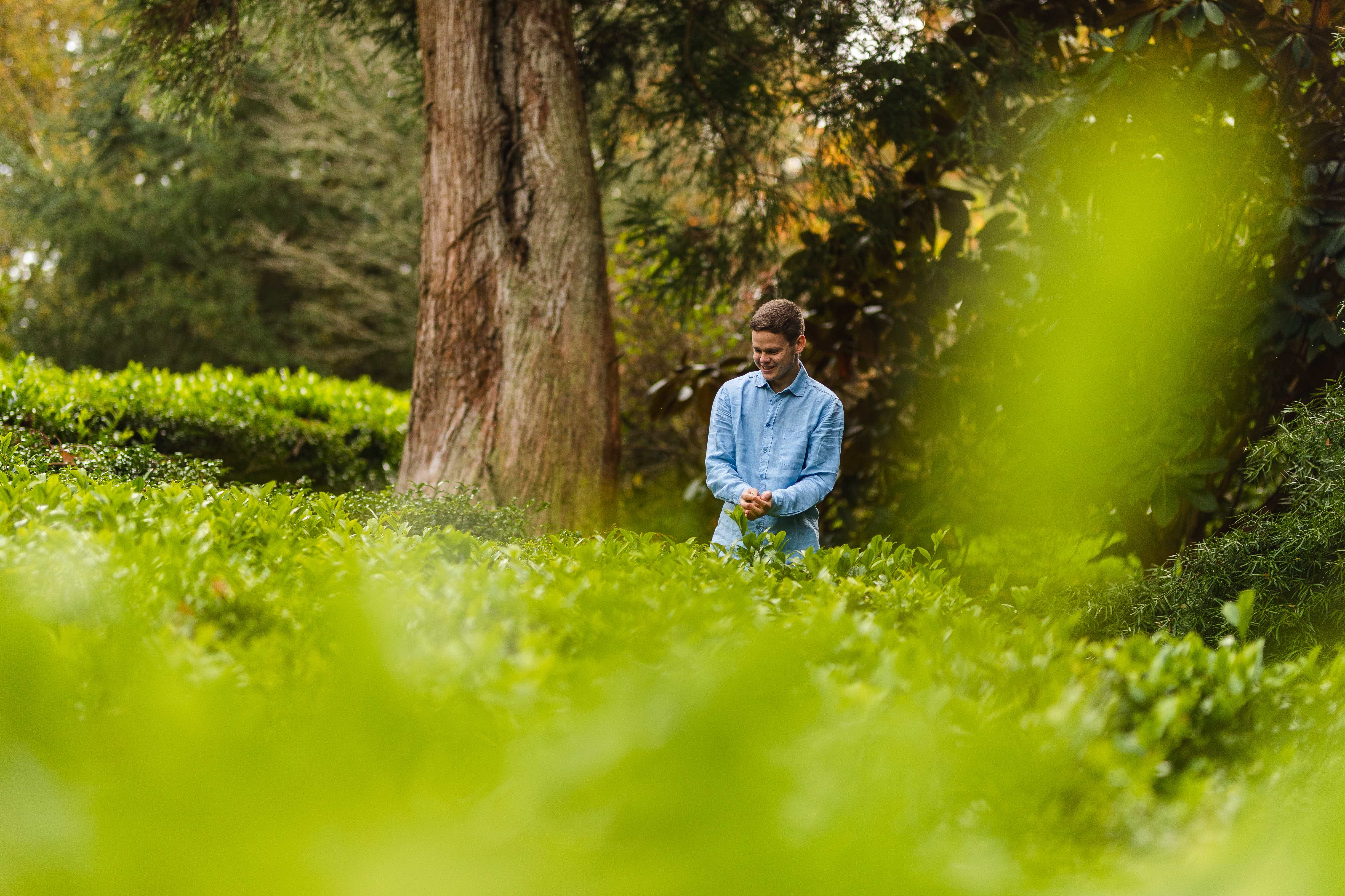 Archie Boscawen amongst a field of tea camelia trees shrubs with blue shirt on.