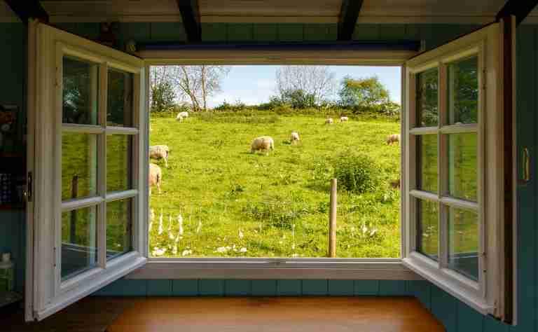 Enquanto reflito sobre meu dia um bem-te-vi canta na minha janela...