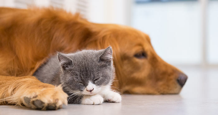 import dog and cat