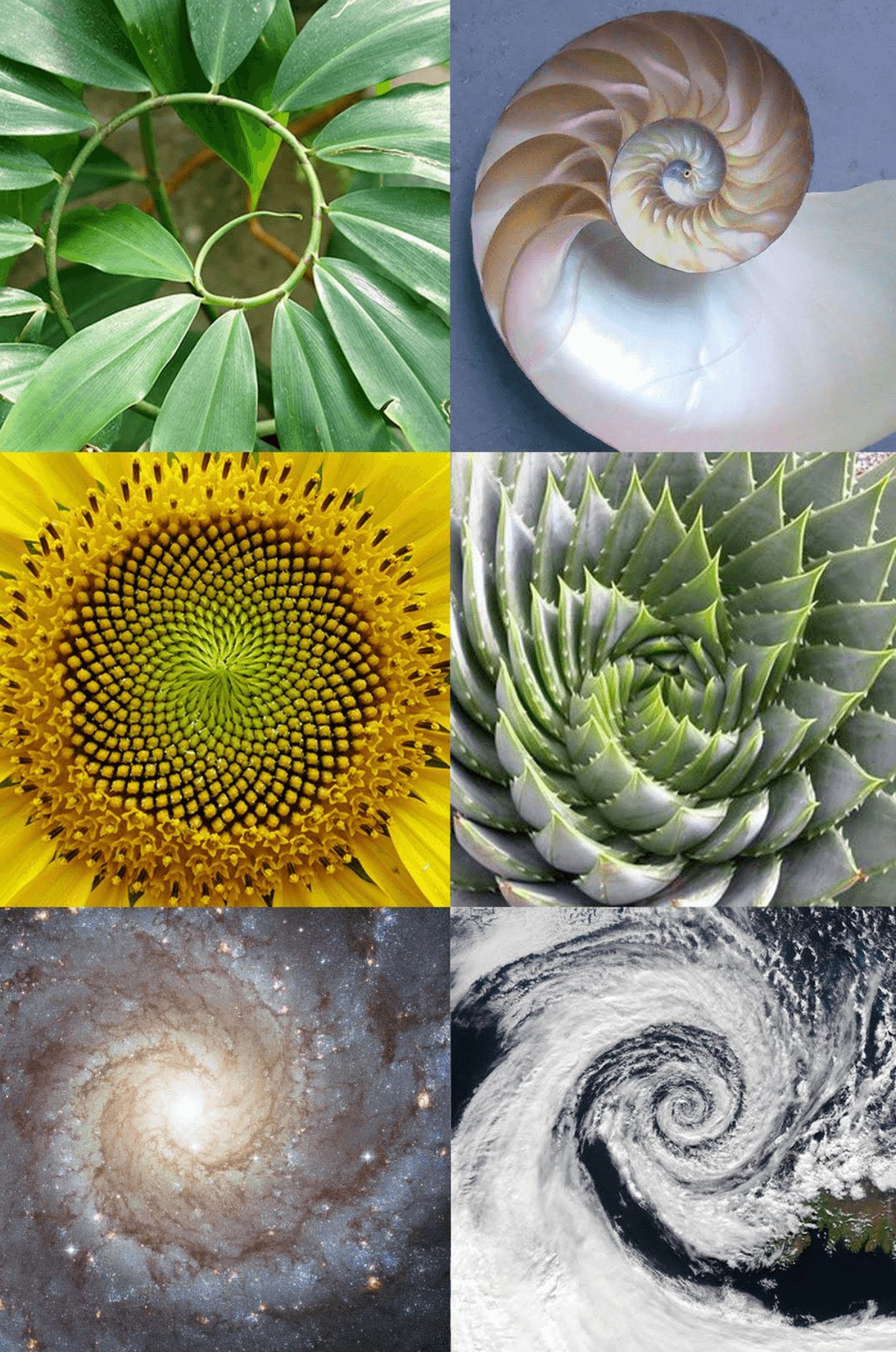 A collage of different spirals found in nature, such as a snail shell, the milky way galaxy, a cyclone.