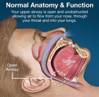 Normal anatomy and function during sleep