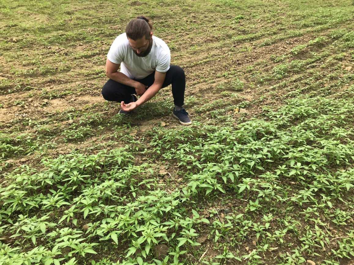 vanja vlasnik integrity hempa sadi prve biljke industrijske konoplje