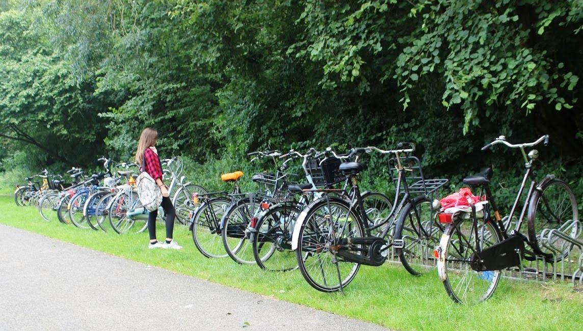 חניית אופניים ביער אמסטרדם